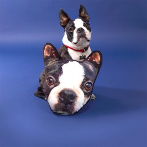 boston terrier with a pillow of it's face