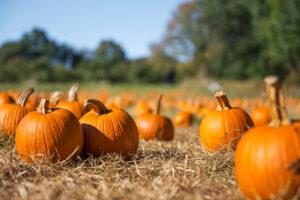 Orange,Pumpkins,At,Outdoor,Farmer,Market.,Pumpkin,Patch.,Copy,Space